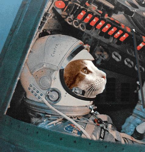 Un chat astronaute