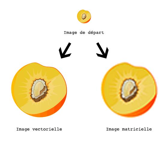 Zoom d'images vectorielle et matricielle