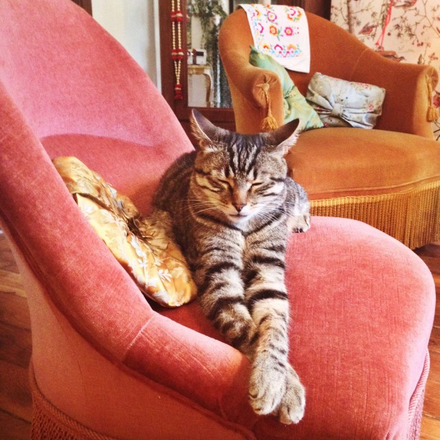 Ferdinand (alias Le Chat à la patte bionique)