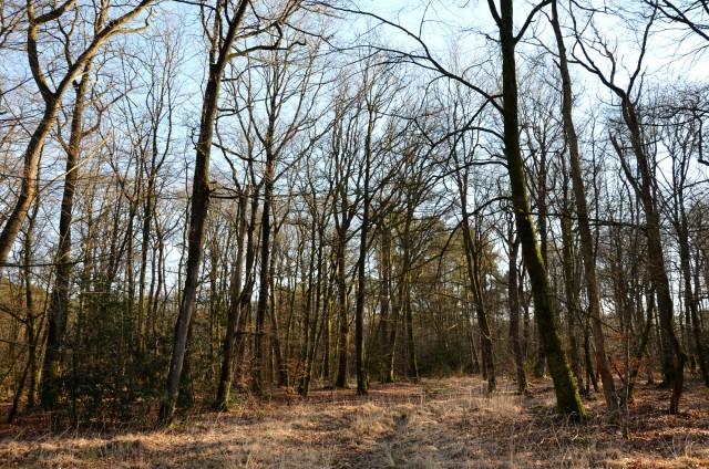 Promenadeen forêt
