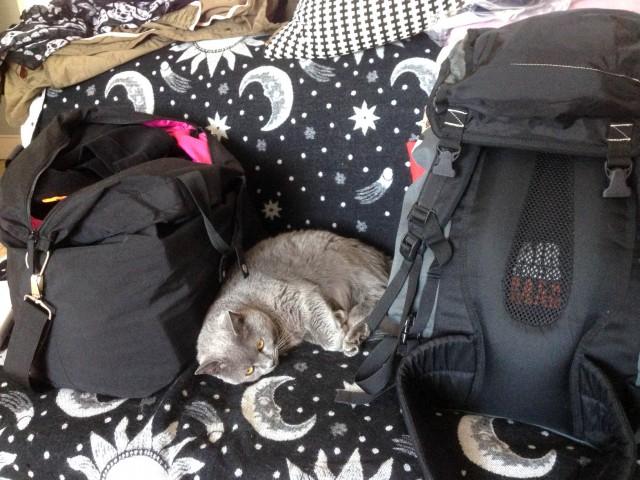 Mon chat roupillant près de mes sacs de voyage