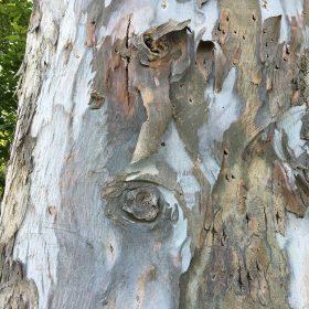 Les yeux des arbres