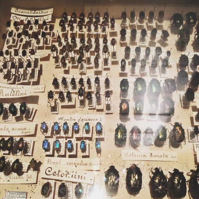 Insectes morts